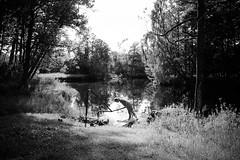 by the river (senniam2) Tags: river