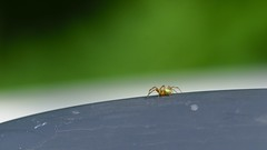 DSCF9128 (faki_) Tags: insect spider fuji fujifilm pk rovar xe1 50230 fujinonxc50230mmf4567ois