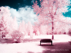 Une Nouvelle Dimension (Sous l'Oeil de Sylvie) Tags: infrarouge infrared banc bench ir arbres trees parcveilleux rose pink rve dream calme paisible paysage landsape sousloeildesylvie printemps sping mai may 2016 canon g11 stgeorges beauce qubec