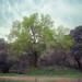 Pintando un árbol