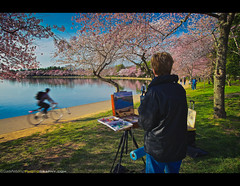 Painting the renewal of spring and the ephemeral nature of life - cherry blossoms along the Tidal Basin in Washington, DC (Sam Antonio Photography) Tags: travel pink flowers vacation usa white lake holiday motion flower color reflection art history tourism floral festival closeup america painting cherry creativity outdoors photography washingtondc us dc washington spring memorial colorful paint day tour symbol blossom branches paintings landmark patriotic historic petal event national american painter april cherryblossom biker cherryblossoms leisure states rearview activity patriotism adults springtime oilpaint tidalbasin cherryblossomfestival travelphotography capitalcities traveldestinations colorimage martinlutherkingmemorial onewomanonly cherryblossomwashington canoneos5dmarkii movingactivity samantonio canon1740lens samantoniophotog