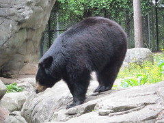 Bear (moonlightbulb) Tags: zoo northcarolina nczoo asheboro