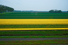 850E7383 - The way to Assen (crimsonbelt) Tags: travel flowers nature netherlands train landscape railways assen