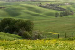Fields of green II (JanKorosec) Tags: flowers trees italy sun field yellow landscape spring shadows hill tuscany 2013