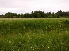 Anglų lietuvių žodynas. Žodis meadow reiškia n pieva lietuviškai.