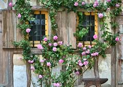 Le rosier et l'enclume (Elisaur) Tags: roses fleurs faades maisons versailles parc rosiers