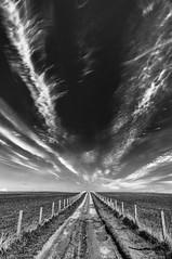 20120507-0048-Edit (www.cjo.info) Tags: bw europe europeanunion nikcollection orkneyislands scotland silverefexpro silverefexpro2 southronaldsay tombofeagles unitedkingdom westerneurope barbedwire blackwhite blackandwhite bluesky cloud farm farmtrack fence fencepost field monochrome path sky