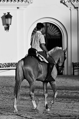 Una tarde con arte (Laura Crdenas) Tags: bw horse white black animals caballo blackwhite andaluca faith bn believe fe roco creencias