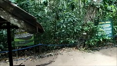 Subterranean River National Park, Palawan Video (jansmh) Tags: park trees people building animal forest river monkey video sand philippines monitor lizard adventure national skog apa subterranean trd semester palawan djur dla encounters byggnad mnniskor ventyr