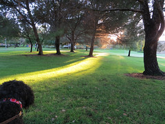 Benni sees the light! (Bennilover, on vacation with Benni) Tags: morning dog sunlight green dogs sunshine early path labradoodle benni shaft castillepark