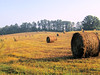 September Hay Rolls........September 9, 2013 (gailpiland) Tags: field golden photo harvest hay hayrolls thegalaxy fantasticnature theunforgettablepictures theperfectphotographer gailpiland flickrstruereflection1