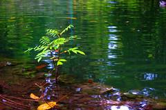 Lonely tree (Manto93) Tags: parco tree water foglie lago milano lonely albero acqua riflessi solitario sempione