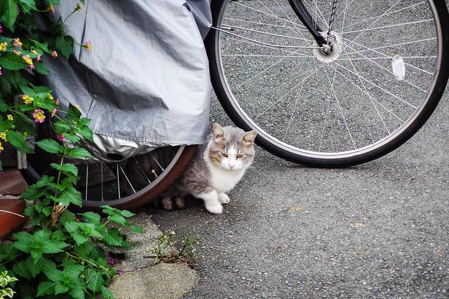 Today's Cat@2013-10-26