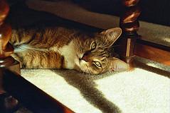 R.I.P. Houdini (mike_cala) Tags: cat feline tabby rip houdini