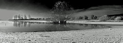 Barnsdale Bay Panorama B&W (AndyorDij) Tags: barnsdale england rutland rutlandwater uk 2013 trees tree autumn reflection reflections panorama andrewdejardin