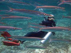 IMG_2126 (Net Diver) Tags: travel nature coral thailand island alpina diving padi phuket reef вода природа отель путешествия owd остров обучение rachayai 2013 kohrachayai тайланд риф пхукет открытая коралловый andamanian