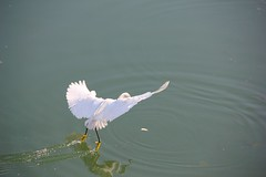 water skii (orithebro) Tags: sea vacation beach water birds hotel israel leonardo tibiria