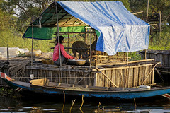 _MG_0041 (Tam Church) Tags: travel sunset lake water photography pig boat asia cambodia village forrest south floating east boating rtw sap tonle