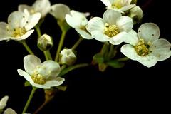 Nostalgie du printemps (domiloui) Tags: flowers composition flickr jardin panasonic lorraine campagne printemps couleur saisons plantes ambiance nuances cooliris abaucourt blinkagain