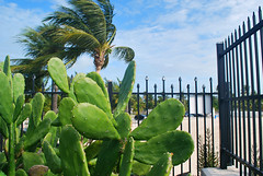 Key West (Florida) Trip, November 2013 0209Ri 4x6 (edgarandron - Busy!) Tags: keys florida keywest floridakeys higgsbeach westmartellotower keywestgardenclub