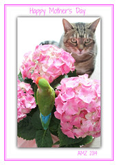 Happy Mother's Day Mom! (bigbrowneyez) Tags: pink flowers pets bird love nature beautiful dedication cat foto sweet blossoms creative adorable appreciation special frame mamma bebe cutiepie tribute hydrangea colourful fiori amore artful heartfelt touching cornice cuadro bello happymothersday bellissimo giornofelicedellemadre