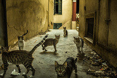 Inner city/Gangs of Athens (Vagelis Poulis) Tags: street city cats animals cat alley gang citylife streetphotography streetlife athens greece balkans balkan downtownathens catgang downtowncats
