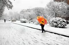 La dame au parapluie, Allées Frédéric Mistral, Toulouse, Haute-Garonne, Midi-Pyrénées (lyli12) Tags: france nature landscape nikon hiver neige toulouse paysage ville urbain flocon hautegaronne midipyrénées d7000