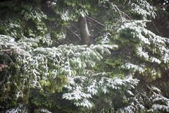 Emotional Snow (Simone De Iuliis) Tags: trees italy snow tree alberi cavadetirreni emotion neve movimento emotional bianco vento emozioni