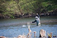 Stroll by the river.. Usk Bridge, Abergavenny (livin the dream*) Tags: nature rural river countryside spring nikon sugarloaf wfc welshflickrcymru ysgyrydfach uskbridge northofavergavenny