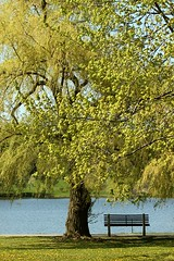 Empty Bench (Karen_Chappell) Tags: travel blue ontario canada tree green nature water leaves bench landscape canal spring scenery branches ottawa scenic rideaucanal