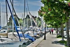 Balade le long du port (amarona_ch) Tags: suisse ch vaud morges