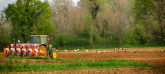 IMG_8827 (pinktigger) Tags: italy tractor field countryside italia country plowing storks fagagna cicogne friul aratura feagne