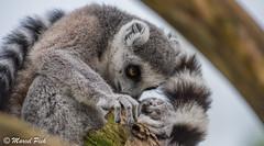 Wildlands Emmen (CapMarcel) Tags: drenthe emmen dierentuin wildlands