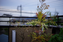 Plants in the strong winds (hidesax) Tags: leica roof sky plants home japan 50mm balcony sony wires rails f2 saitama ageo a7ii summicronm hidesax plantsinthestrongwinds