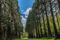 DSC07379 (davyskin46) Tags: sony sequoia slt a57 sonydt1650f28ssm