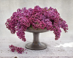 lilac and pewter bowl (photoart33) Tags: stilllife tree classic texture purple lace lilac