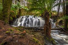 Lockwood creek falls (Dave Bosworth Photography) Tags: trees fern water river waterfall nikon rocks australia tasmania manfern davebosworth d7200 nikond7200