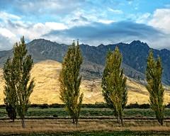 Stuck in Traffic (DASEye) Tags: trees newzealand mountain mountains tree nikon nz queenstown roadside davidadamson daseye
