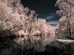 The snow in June (Dr. JS Photography) Tags: drcanal delawareandraritancanalstatepark hoya ir r72 river infrared infraredfilter olympus1232 tree