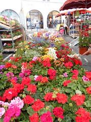 Cahors France 19 (artnbarb) Tags: france market geraniums cahors