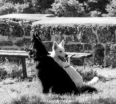 black and white (Fay2603) Tags: dogs nature monochrome animals tiere blackwhite outdoor natur frame schwarz hunde weis einfarbig schwarzweis fotorahmen
