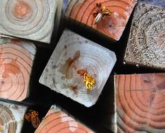 4x4 (David Pilarczyk) Tags: wood texture garage grain negativespace woodgrain garagestilllife