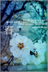 """White cloud of mist above white cherry-blossoms . . . Dawn-shining mountains."" Matsuo Basho. # # # # # # # #Spring #Flowers #Blossom #Trees #Nature #Beauty (igorpo91) Tags: flowers trees nature beauty spring blossom"