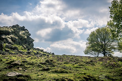The Old Man Of The Beacon Enjoying The Sun (A.Tongue Photography) Tags: trees cloud sun man tree face sunshine rock clouds spring rocks cloudy leicestershire leicester oldman beacon beaconhill springtime oldmanofthebeacon