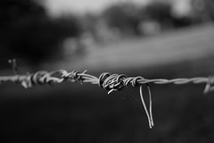 IMG_4919 (Justin Brown Photographer) Tags: newzealand fence wire farm auckland nz barbedwire barbed