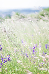 Meadow in the wind (Talixor) Tags: flowers natur meadow wiese blumen regensburg spaziergang wanderung