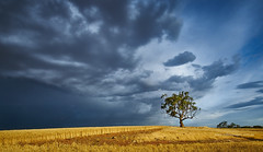 Approaching Storm (explored) (Valley Imagery) Tags: summer cloud storm tree wheat south australia farmland barossa