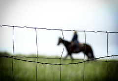 Through the Fence (sjoblues) Tags: horse silhouette montana barbedwire cowgirl