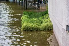 Inondations Seine 2016 (efabet) Tags: france seine eau fleuve seineetmarne 2016 inondations regionparisienne