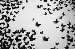 The flight (Anas Lecointre) Tags: blackandwhite white toronto ontario canada black art wall museum modern butterfly photography noir photographie noiretblanc modernart flight muse papillon harbourfront vol mur blanc envol musedartmoderne